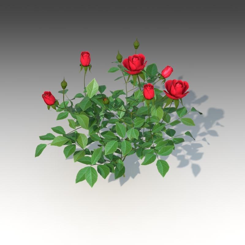 flower rose set x