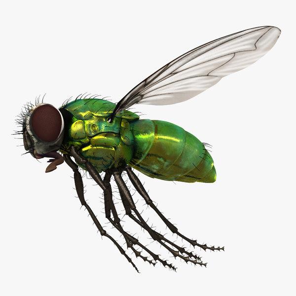 green bottle fly pose 3d model