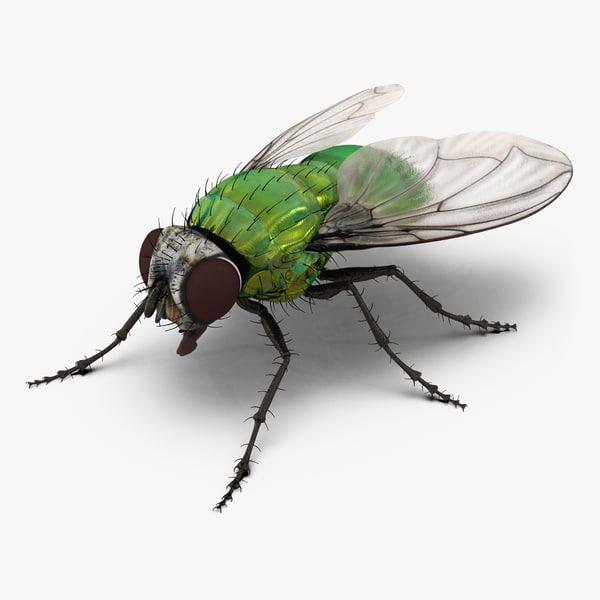 3d green bottle fly model