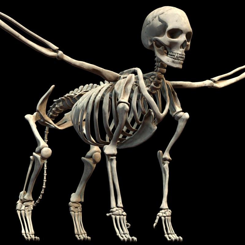 mythological bone sphinx 3d obj