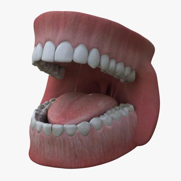 3d teeth gums model