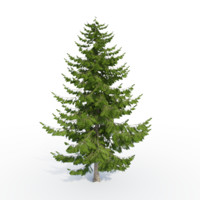 3d larch tree model