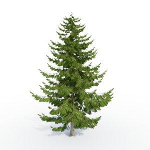 3d larch tree model