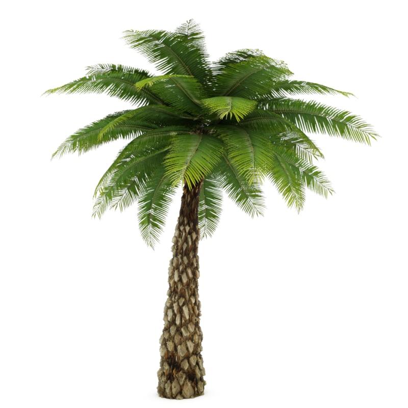 date palm tree 3d max