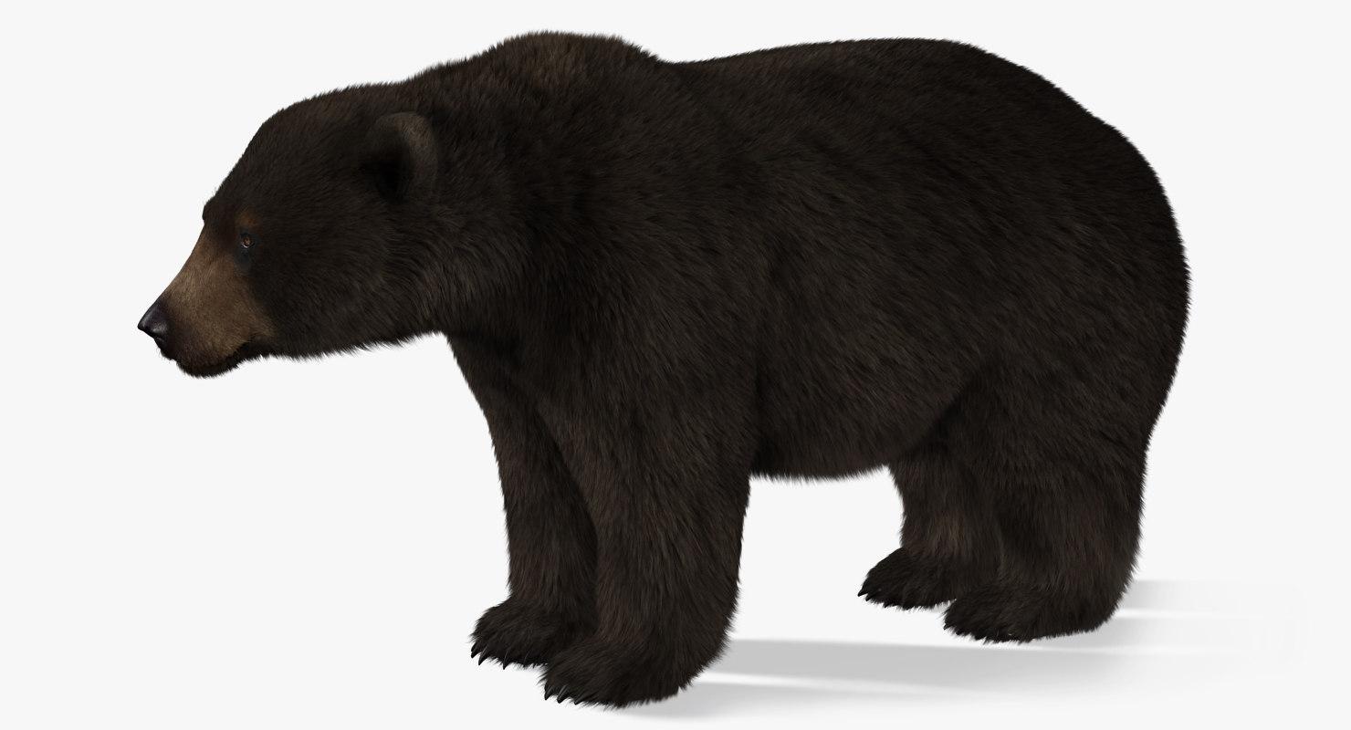 3d bear 2 fur model