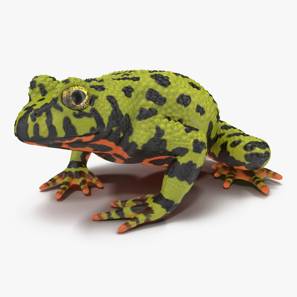 toad frog rigged max