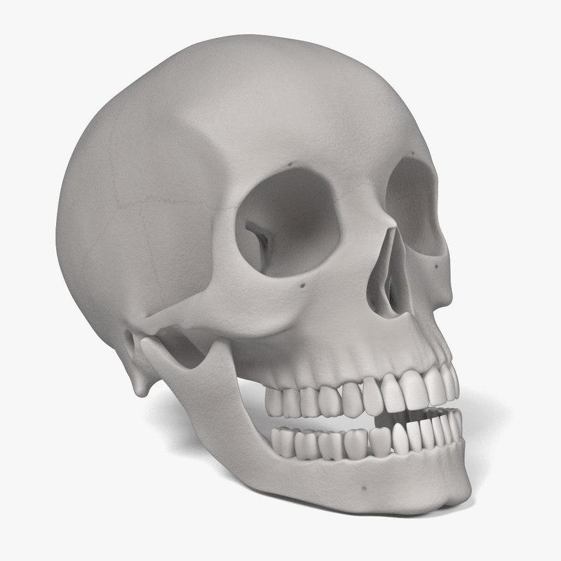 female skull 3d model