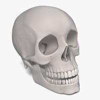 male skull 3d model