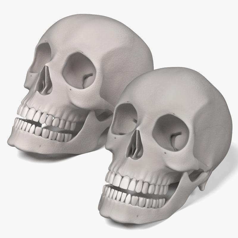 3d female male skulls