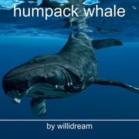 humpack whale c4d