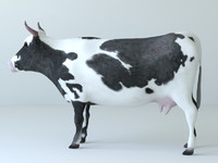 3d cows unwrapped model