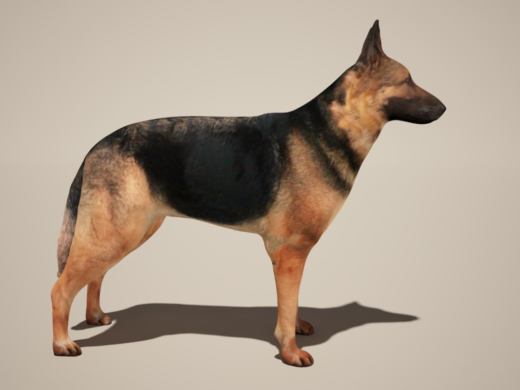 3d model dog german shepherd