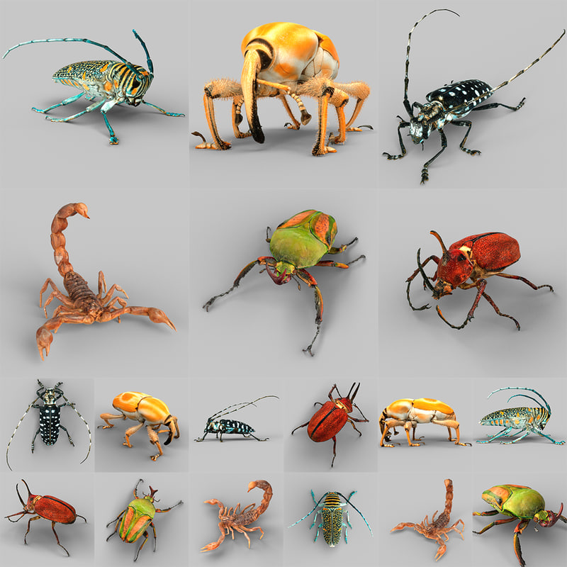 3d model insect calloplophora sollii