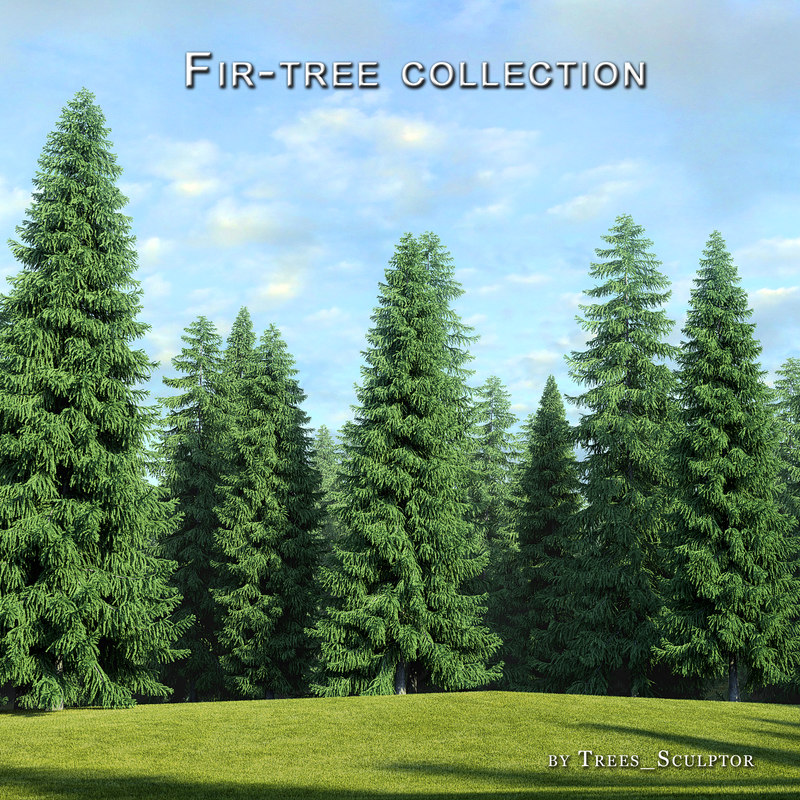 3d hi-poly fir-trees tree