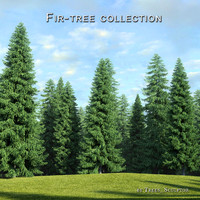 3d hi-poly fir-trees tree