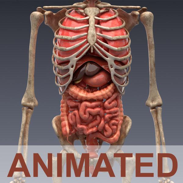 anatomie innere organe frau
