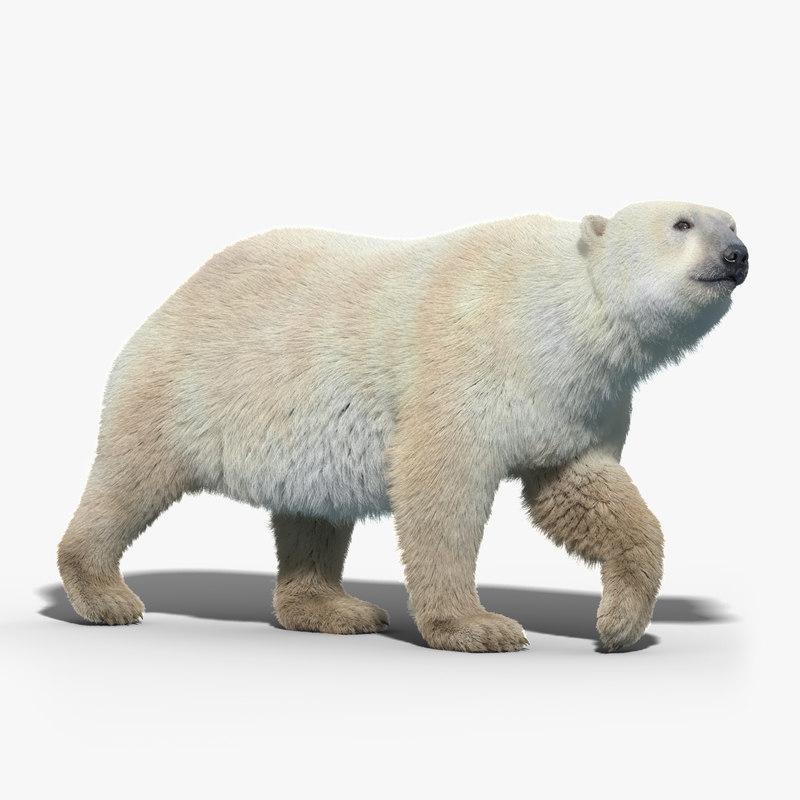 max polar bear fur rigged