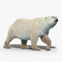Polar Bear(FUR)(RIGGED)