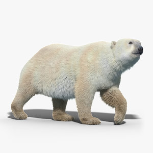 max polar bear fur rigged