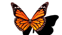 3ds butterfly fly