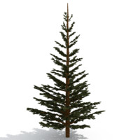 3d pinetree tree model