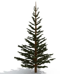 3d pinetree tree model