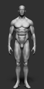 3d male body form model