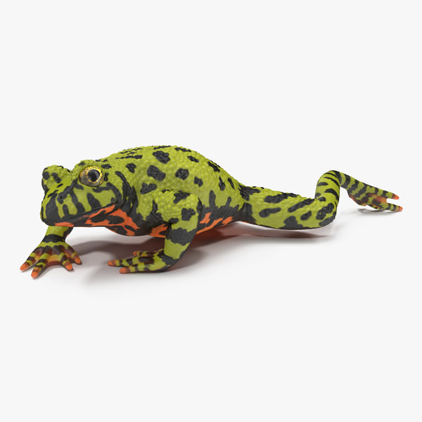 max bellied toad frog pose