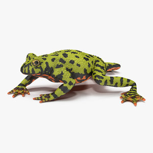 3ds bellied toad frog pose