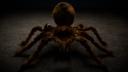 Goliath Birdeater Spider 3D models