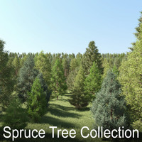 Spruce Tree Collection