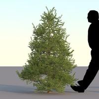 max spruce tree