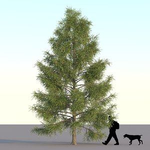spruce tree 3d max