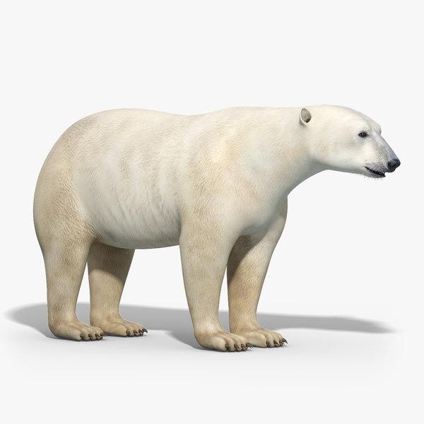 3d obj polar bear