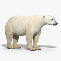 3d obj polar bear
