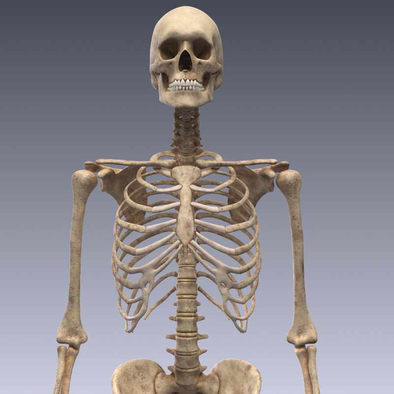 realistic human skeleton rigged 3d lwo, Skeleton