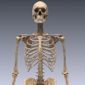 realistic human skeleton rigged 3d lwo