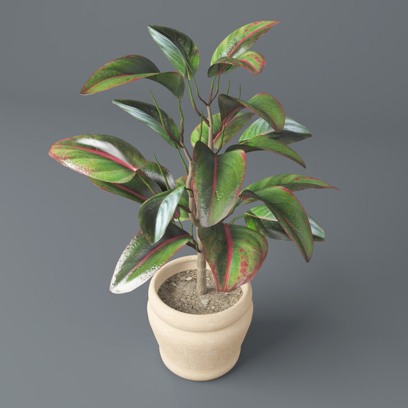 3d model pipal plant