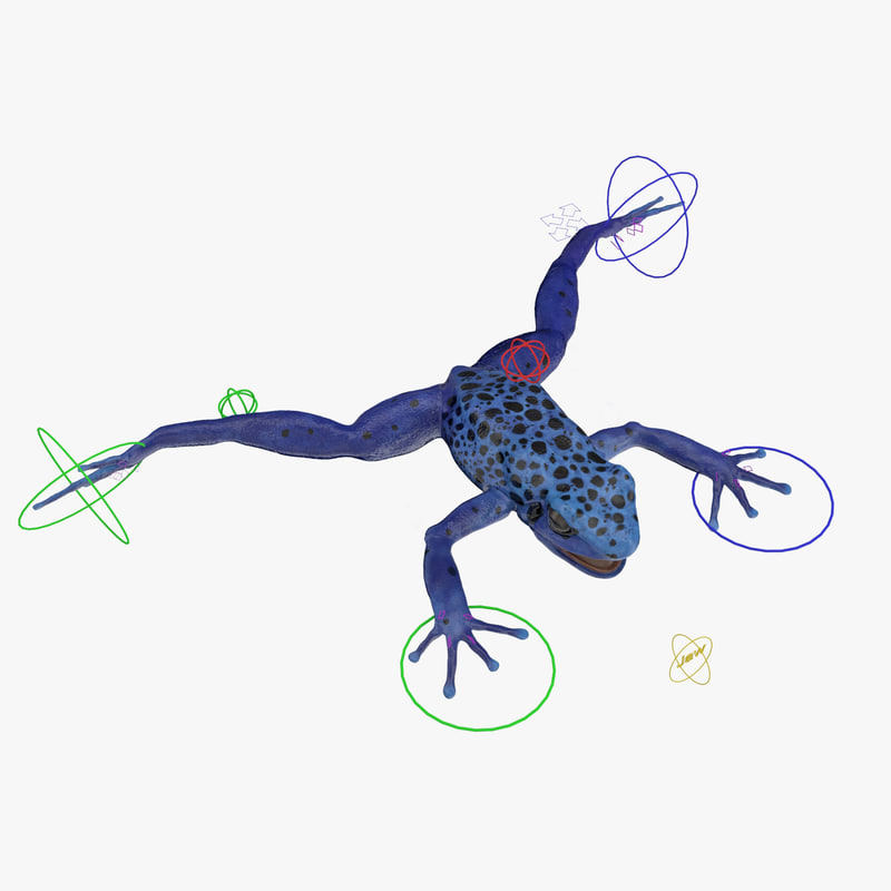 3d model poison dart frog blue