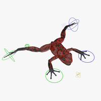 3d model poison dart frog red