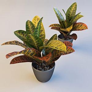 3d model croton plant pot