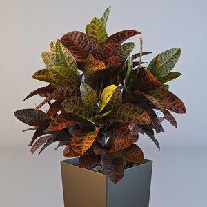 croton plant pot max