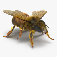 bee pose 4 3d model