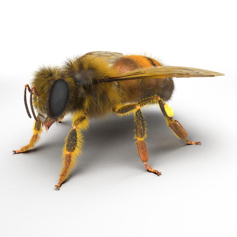 bee realistic 3d model