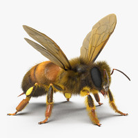 bee rigged 3d max