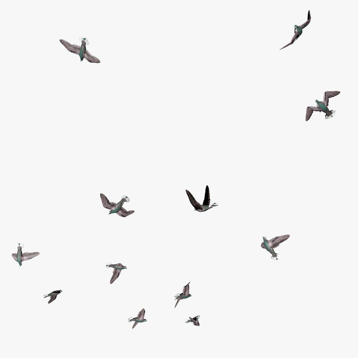 group flying pigeons animation 3d c4d