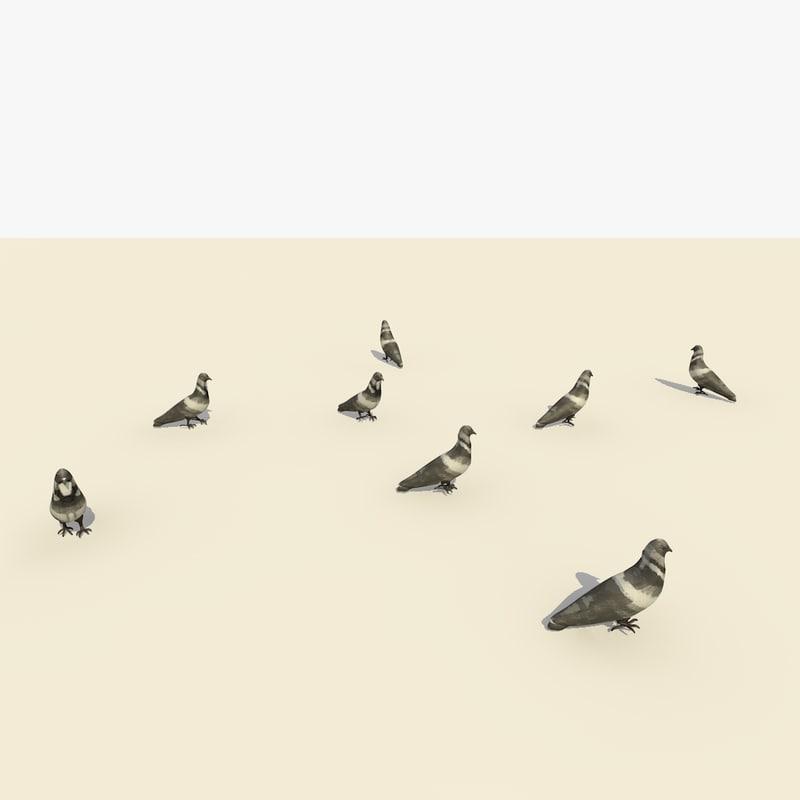 group walking pigeons animation 3d c4d