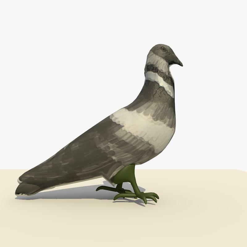 single walking pigeon animation c4d