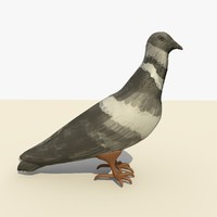 c4d single pigeon standing eating