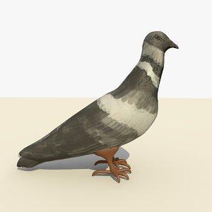 c4d single pigeon standing eating